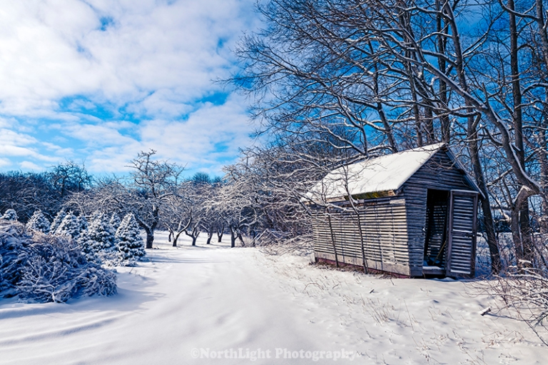 Storage shed at christmas tree farm and old apple orchard.