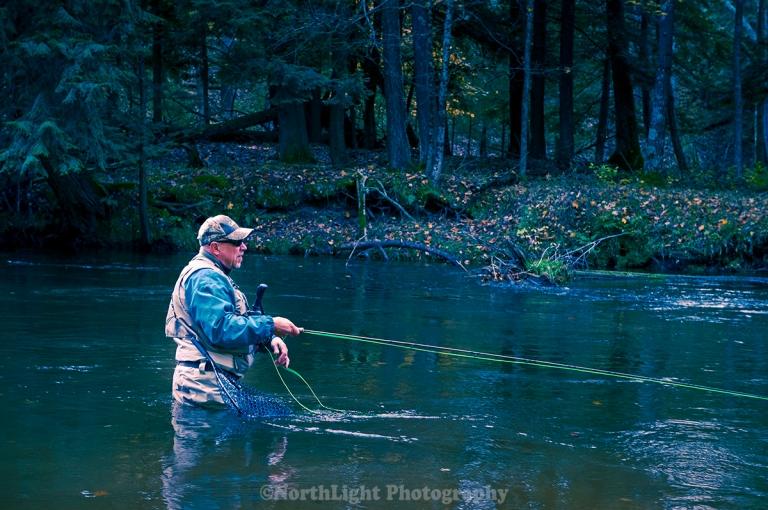 Fly fisherman casting for steelhead trout in the Pere Marquette River near Walhalla, Michigan, USA