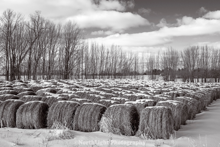 Rolled hay bales on Hansen Road, Mason County, Michigan, USA